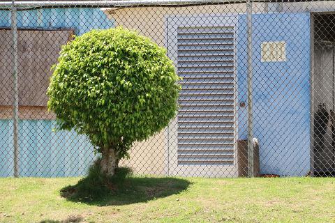 גיזום עצים בתל אביב